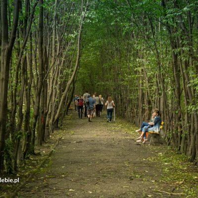 Park im. Jacka Kuronia w Sosnowcu - Fot. Radek Struzik
